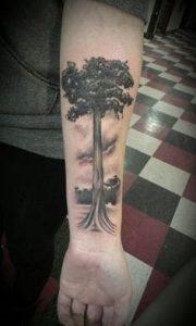 Tree Tattoo 51