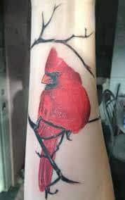 Cardinal Tattoo 15