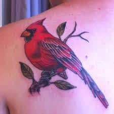 Cardinal Tattoo 31