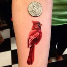 Cardinal Tattoo 50