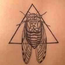 Cicada Tattoo 33