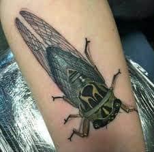 Cicada Tattoo 37