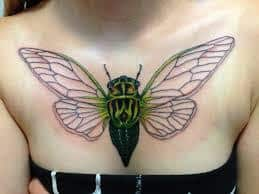 Cicada Tattoo 41