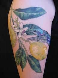 Lemon Tattoo 46