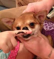 Mustache Tattoo 24