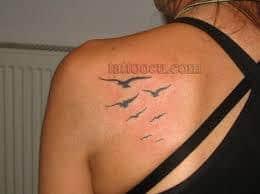 Seagull Tattoo 14
