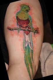 quetzal tattoo 27